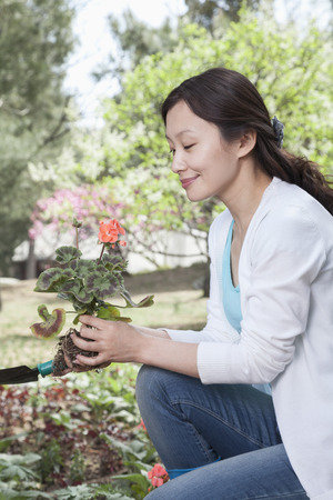 above 30: Woman planting flowers. Stock Photo