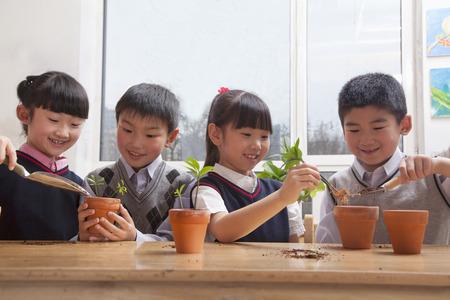 all under 18: Schoolchildren planting plants into flowerpots in the classroom