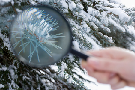 british ethnicity: A person holding a magnifying glass next to a fir tree
