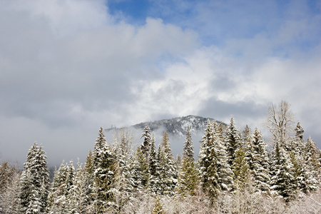 image source: A mountain and fir trees