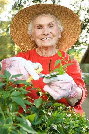 hojas antiguas: Mujer senior de jardiner�a Foto de archivo