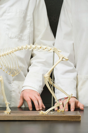 stood: Two students stood with an animal skeleton Stock Photo
