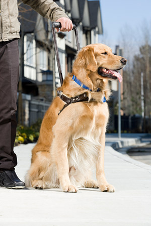 service dog: Blind man and a guide dog Stock Photo