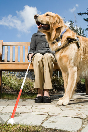 animal eye: Blind woman and a guide dog