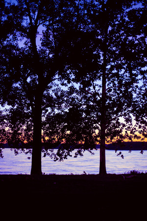 Pair of trees at sunset next to lake Stock Photo