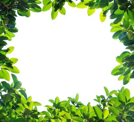 緑の葉の国境、白の背景に分離されました。