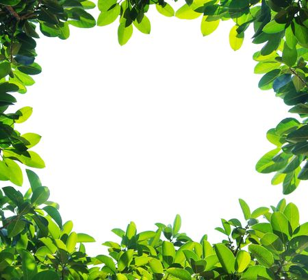 Green leaf border,Isolated on white background Stock Photo - 5790567
