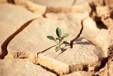 草の droughty 地 (環境保護) 写真素材