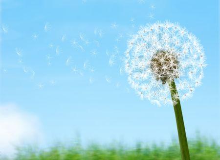evolving: Lovely dandelion against sky background