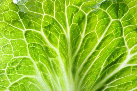 Fresh green Lettuce ��Features vein�� Stock Photo - 6659819