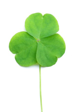 Close up of clover plant on white background Stock Photo - 6659904