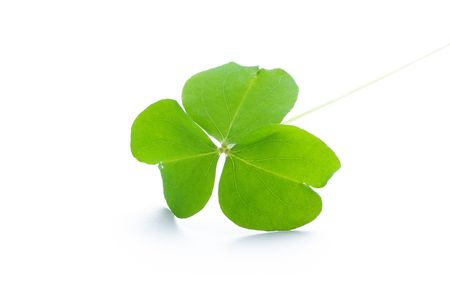 Close up of clover plant on white background Stock Photo - 6659816