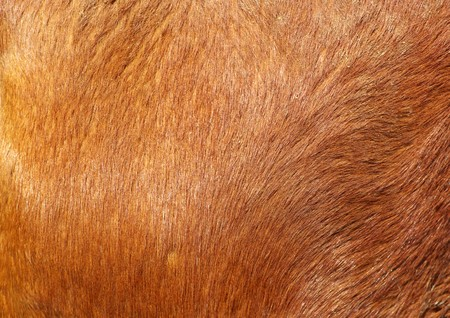 brown textured cowhide ��Background texture�� photo