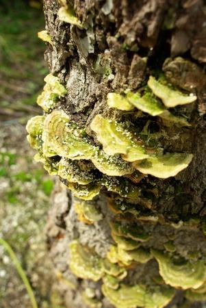 fungi woodland: mushroom