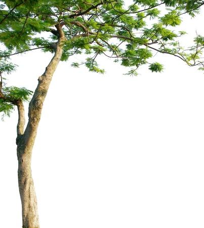 白い背景に対して隔離されるツリー
