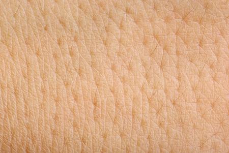 La piel de textura de fondo