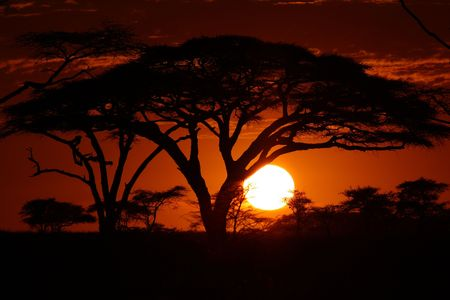 africa safari: Africa safari sunset in trees