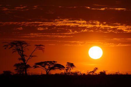 Beautiful africa safari sunset Stock Photo