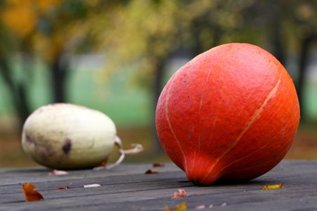 Two autumn pumpkins on the table photo