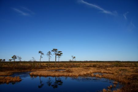 Spring in a marsh with blue sky photo