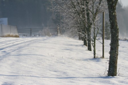 Winter background with snowy road and tree avenue photo