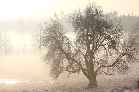 Foggy winter landscape in cold december day photo