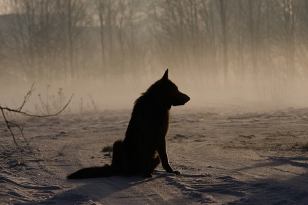 Dark silhouette of dog in cold winter day photo