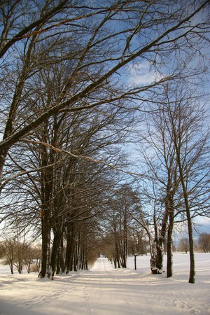 cloudless: Avenue of trees in cold winter day Stock Photo