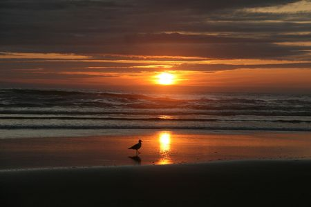 Surf, sand, seagull and sunset Stock Photo - 7459201