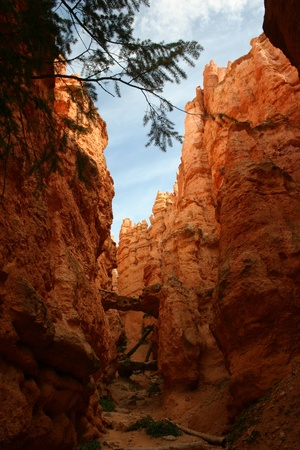 A view from the bottom of Bryce Canyon