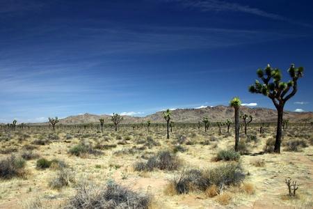 A view of Joshua Tree National Park Imagens