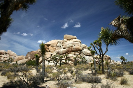 A view of Joshua Tree National Park Stock Photo