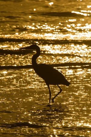 A silhouette of a wading egret