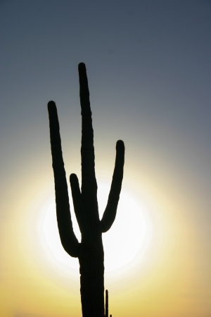 sihlouette: A sihlouette of a saguaro cactus in front of a late afternoon sun Stock Photo