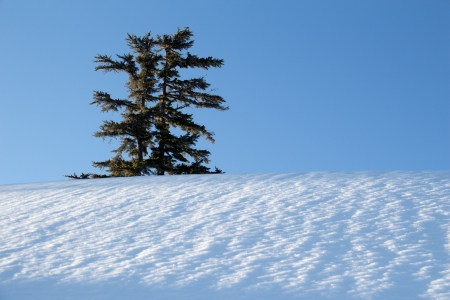 A tree in a field of snow against a blue sky