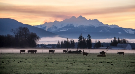 Early morning on a farm in the shadow of the Cascade Moutains