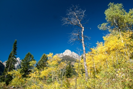 Colorful aspen trees on a mountainside Stock Photo