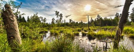 swamp: Swamp Scenery Stock Photo