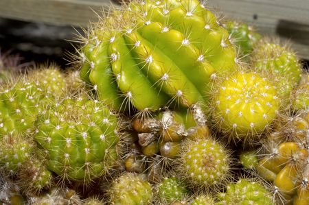 Multi Colored and Multi Varieties of Cactus Imagens