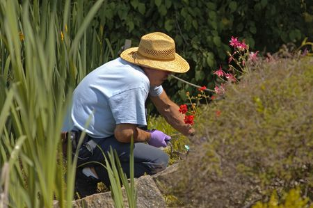 bassin jardin: Le jardinier de jardinage dans l'�tang de jardin