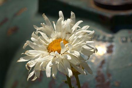 정원에 너덜 너덜 한 꽃 스톡 콘텐츠
