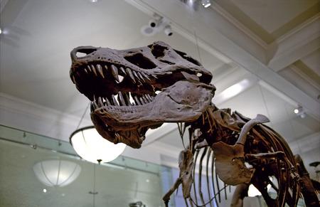 Prehistoric Dinosaur bones on exhibit in a Museum 版權商用圖片