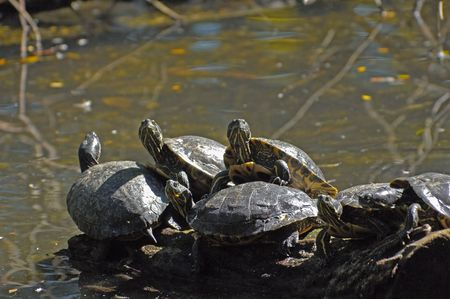 Turtles on a log at the Queens Zoo