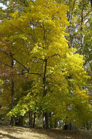 Tress in Prospect Park changing foliage colors in Autumn