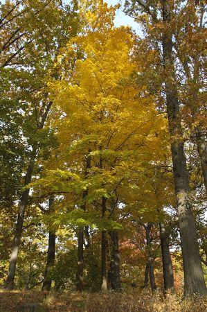 Tress in full foliage at Prospect Park