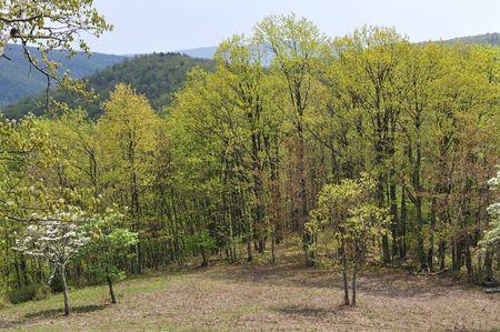 Spring Colors On Trees In A Clearing Zdjęcie Seryjne