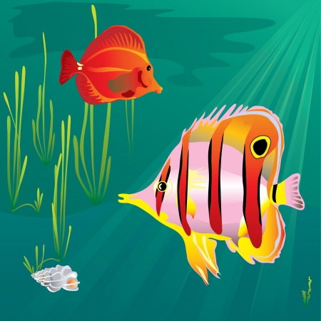 butterflyfish: The Copperband Butterflyfish and red fish om green backround