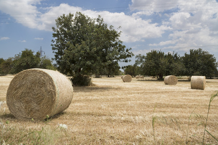 ragusa: Round bales of hay in Ragusa Modica Stock Photo