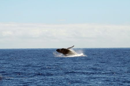 Whale jumping out of the water Stock Photo - 531620