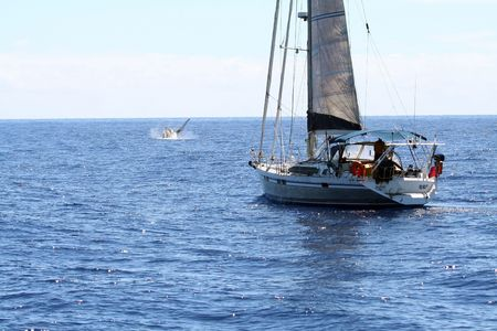 Sailboat watching whales on the ocean photo